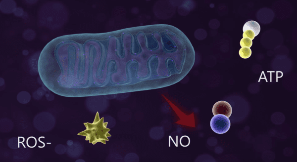 Photobiomodulation Process